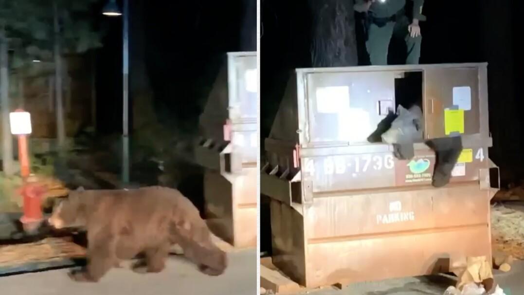 Mały niedźwiadek w pułapce, z pomocą ruszyła policja