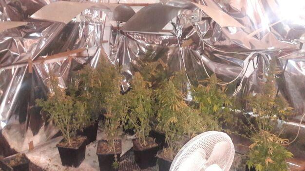 Policjanci zlikwidowali plantację marihuany na działce letniskowej