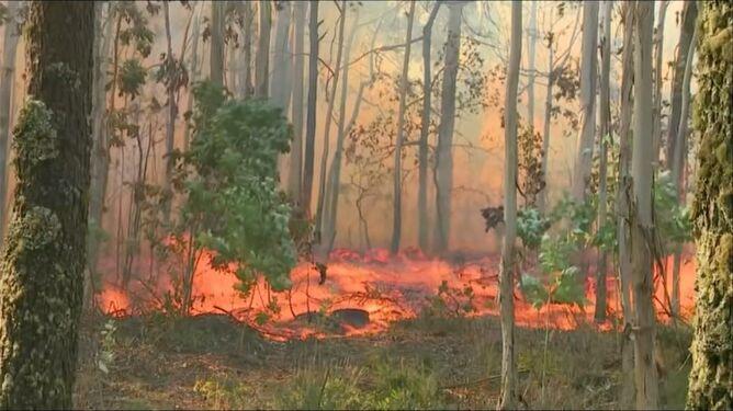 """Ogień trawi lasy w Hiszpanii, Portugalii i Francji. To """"ogromne zagrożenie"""""""