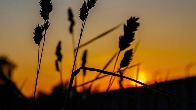 Zmiany klimatu zwiększają liczbę alergików