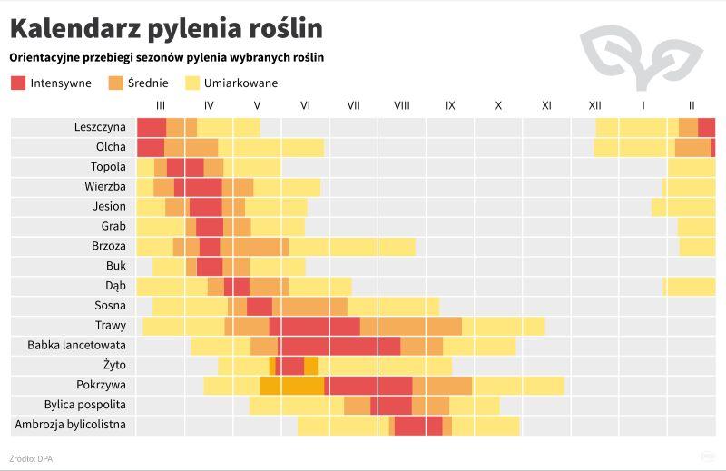 Kalendarz pylenia roślin (PAP/Maciej Zieliński, Maria Samczuk)